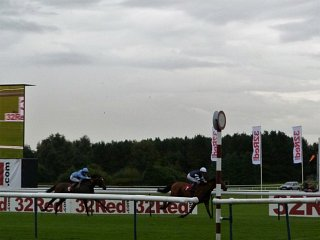 Marmajuke Bay at Haydock
