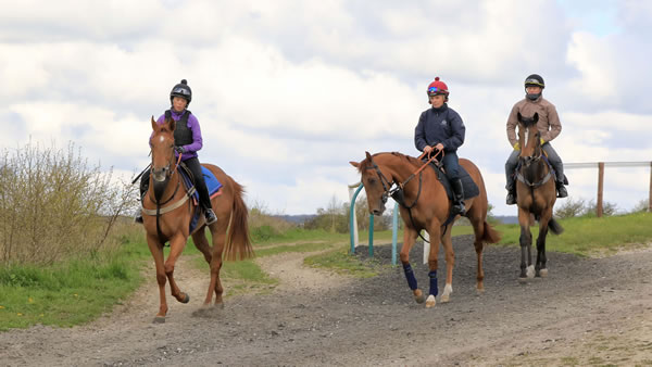 Leaving the gallops